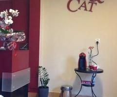 Groomer, DOG&CAT Salon dla psów, psi fryzjer, 13 lat na rynku