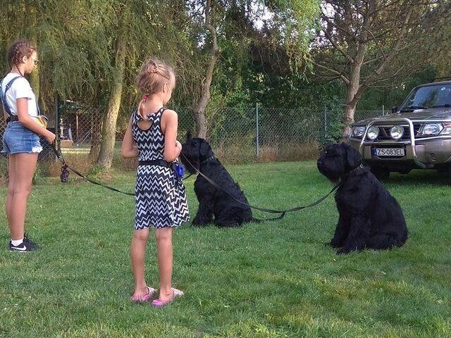 Szkolenie psów. Behawiorysta - konsultacje - 3/5
