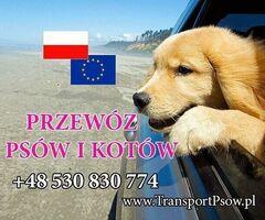 Transport psa 400zł bez limitu km przewóz kota psów zwierząt kurier