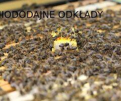 Miododajne odkłady pszczele