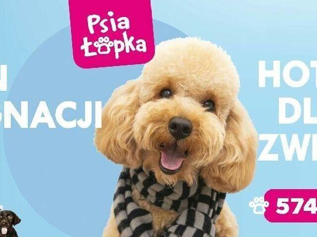 """Psi Fryzjer """"Psia Łapka"""" Groomer Strzyżenie Salon Dla Psów Pielęgnacji - 1/4"""