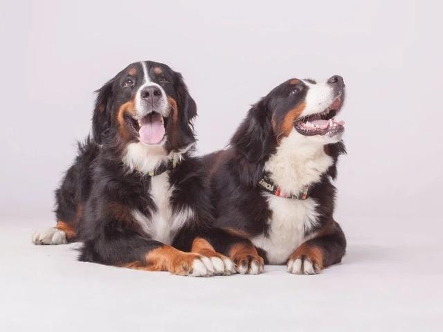 Szkolenie psa , trener psów, szkolenie behawioralne, psie przedszkole - 2/3