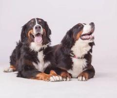 Szkolenie psa , trener psów, szkolenie behawioralne, psie przedszkole