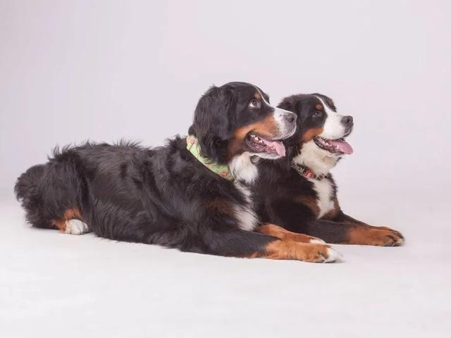 Szkolenie psa , trener psów, szkolenie behawioralne, psie przedszkole - 3/3