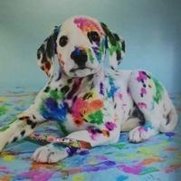 ELLIS - Psi Fryzjer / Groomer / Salon Pielęgnacji dla Zwierząt