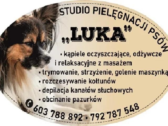 """Salon dla Psów """"Luka"""" Groomer Psi Fryzjer Pielęgnacja Zwierząt - 1/5"""