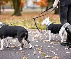 Wyprowadzę psa/y na spacer