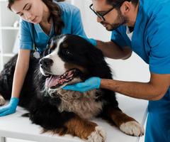 Ubezpieczenie psa - my zapłacimy za jego leczenie